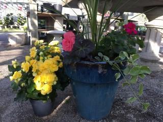 WIN-FLOWER-PO_20170517-103819_1