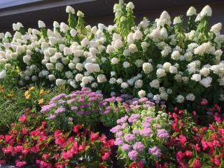 Fall is the perfect time to add to your garden!